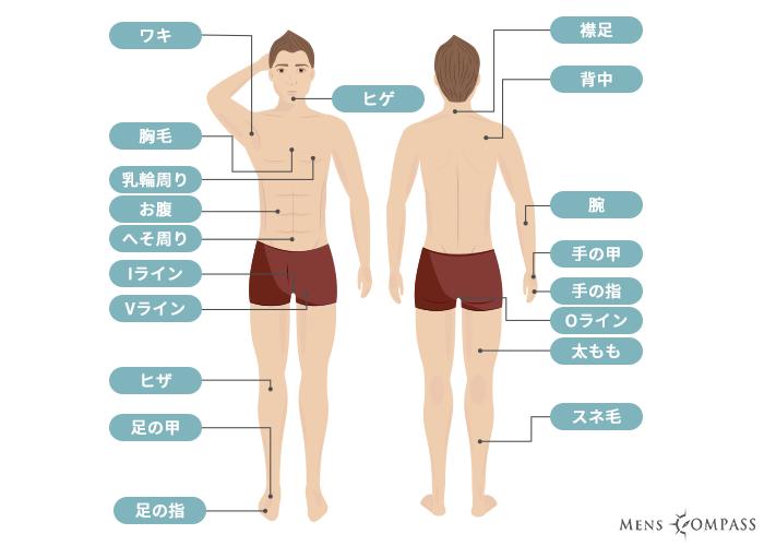 脱毛各部位の説明(メンズ・男性)